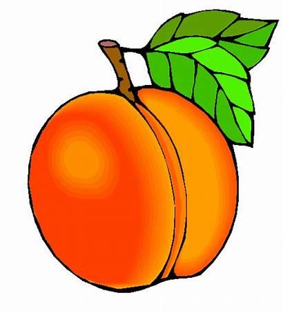 Peach Clipart Peaches Clip Georgia Cliparts Idea
