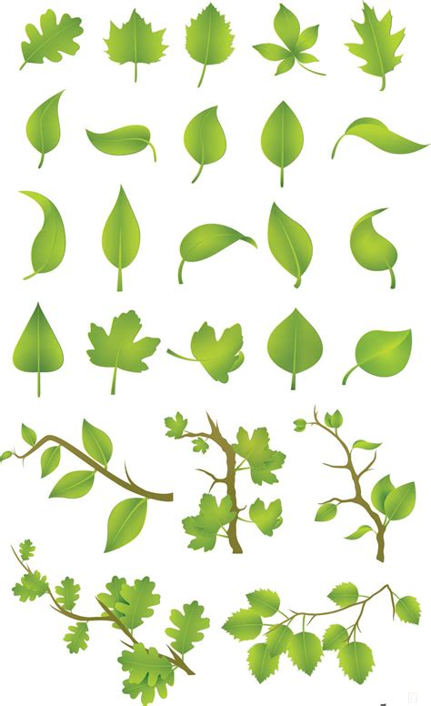 green leaves vector set
