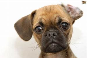 Cute Mixed Dog Breeds HD Wallpaper, Background Images