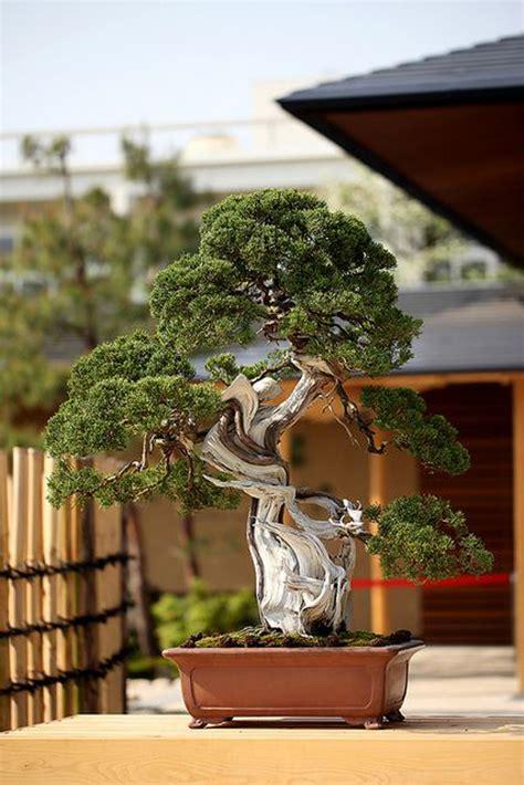 bonsai art planter ideas homemydesign