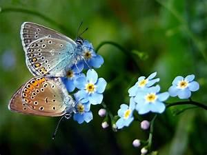 Kleine Fliegen In Blumen : kleine bl tenwunder vergissmeinnicht vergissmeinnicht ~ Lizthompson.info Haus und Dekorationen