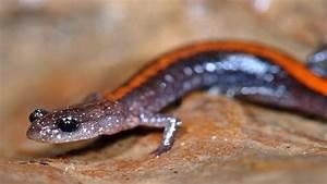 Cute Tiny Salamander! - YouTube