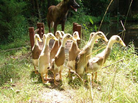 Quiet Ducks?  Page 2
