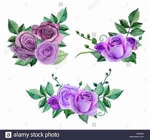 Watercolor purple roses vector. Flowers clip art hand ...