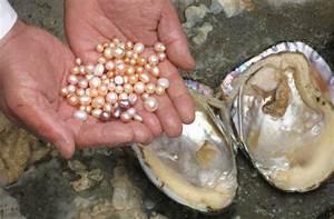 Tears of Mermaids: The Secret Story of Pearls - Etsy Journal