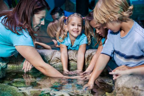 aquarium seine et marne aquarium sea val d europe marne la vall 233 e r 233 gion idf