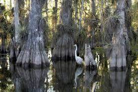 Florida Legislature Slashes Funds For Land Acquisition ...