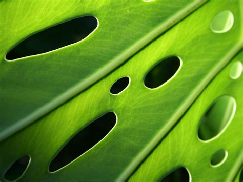 The Colors of Nature: Green Leaves | AmO