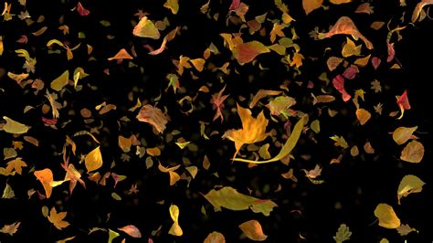 Fall Backgrounds Realistic by Tag Swirling Downloops Creative Motion Backgrounds