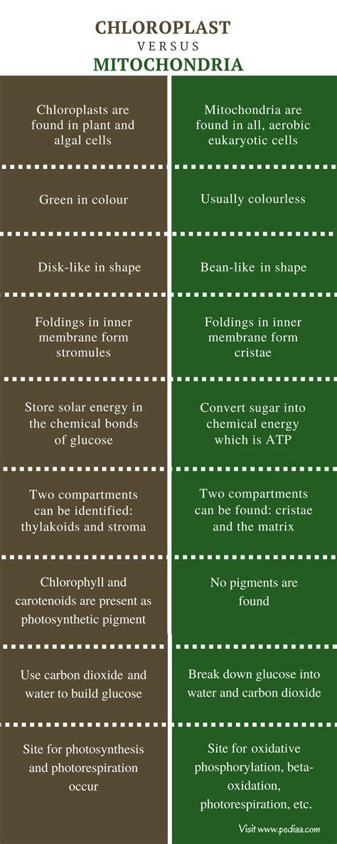difference  chloroplast  mitochondria