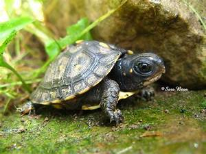 Baby turtles wallpapers | Baby Animals