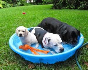 Keep Pets Cool