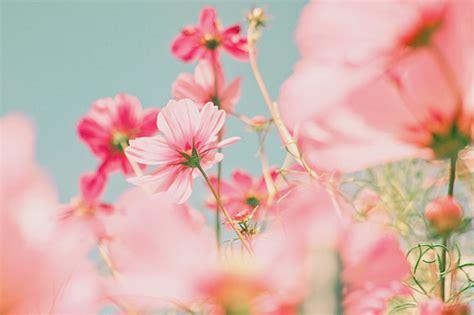 Pretty tumblr flowers castrophotos beautiful flowers on tumblr mightylinksfo