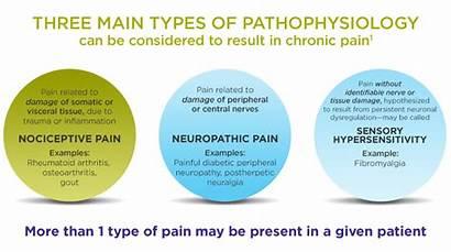 Dolore Pain Types Fisiopatologia Three