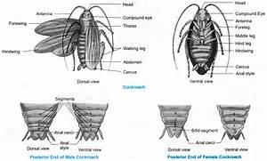 Ncert Class 9 Science Lab Manual - Animal Kingdom