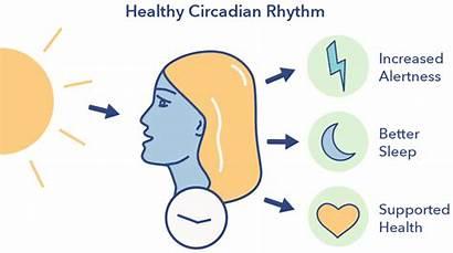 Circadian Rhythm Sleep Health Internal Biological Function
