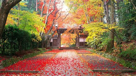 autumn  japan golden autumn landscape wallpaper