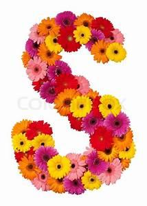 Letter S - flower alphabet isolated on white background