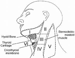Lymph Node Levels Of The Neck  As First Defined And Applied By The