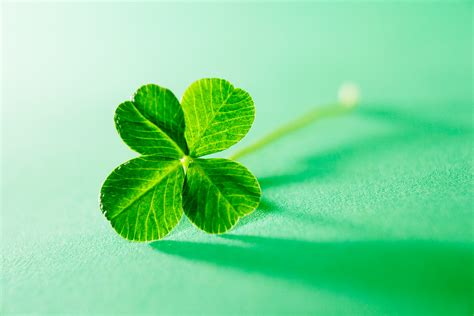 four leaf clover the mysterious genetics of the four leaf clover wired