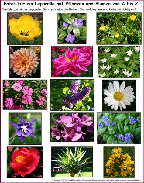 blumen mit namen leporello blumen und pflanzen a bis z fotos medienwerkstatt wissen 169 2006 2017