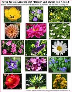 Blumenarten Az Mit Bild : leporello blumen und pflanzen von a bis z fotos medienwerkstatt wissen 2006 2017 ~ Whattoseeinmadrid.com Haus und Dekorationen
