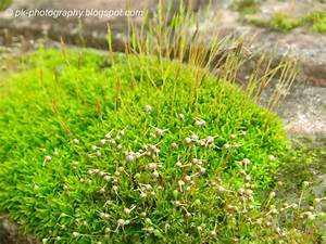 Moss Plants Nature, Cultural, and Travel Photography Blog