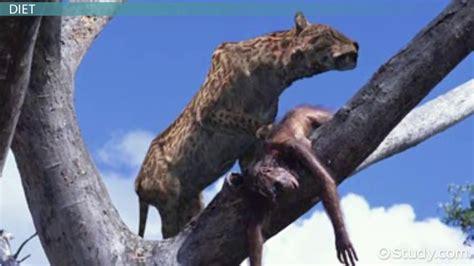 hominids traits diet behavior video lesson