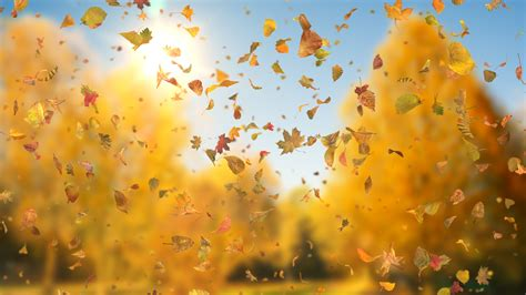Fall Backgrounds Realistic by Tag Relaxing Downloops Creative Motion Backgrounds