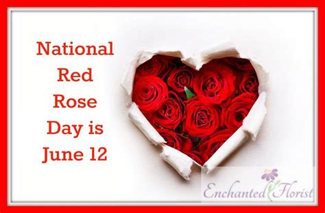 celebrate  june national rose month  red rose day