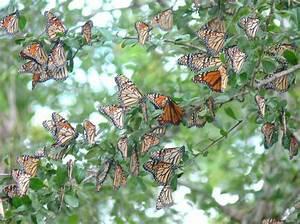 Planning A Nursery For Butterflies