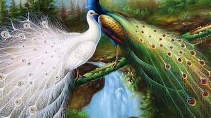 Birds Wallpapers Lovely Lovebirds Hdwallpaper Main Ultra