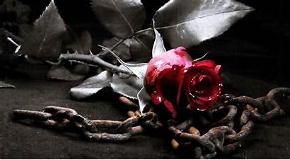 Gothic Wallpapers Roses Flower Backgrounds Windows 1080