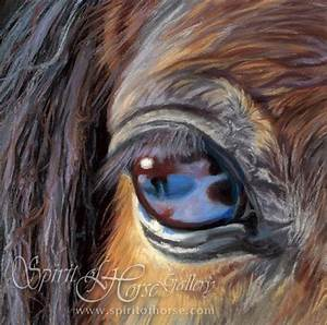 Amazing story and stories behind these eyes. The horses ...