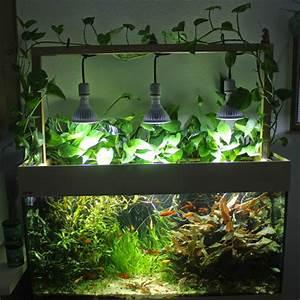 Süßwasserfische Fürs Aquarium : die besten 25 goldfische im aquarium ideen auf pinterest ~ Lizthompson.info Haus und Dekorationen