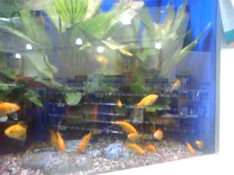 pets at home fish tank