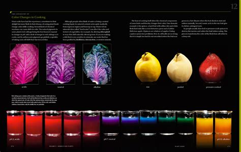 modernist cuisine  art  science  cooking