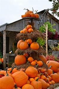 Impressive, Autumn, Garden, Decor, Ideas