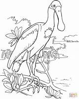 Spoonbill Roseate Coloring Bird Pages Clipart Printable Drawing Colouring Supercoloring Birds Clip Animal Adult Pink Drawings Cliparts Easy Watercolor Printables sketch template