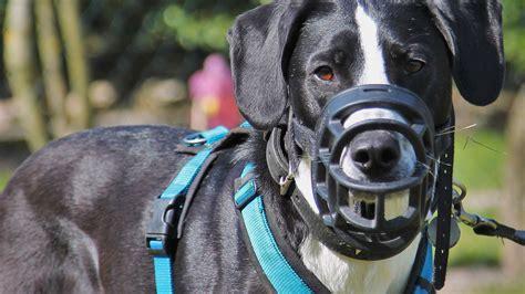 verhaltenstherapie hundeschule landog