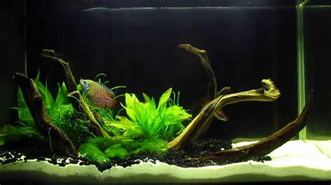 fluval spec v aquascape fluval spec v 5 gallon aquascape planted desk tank with