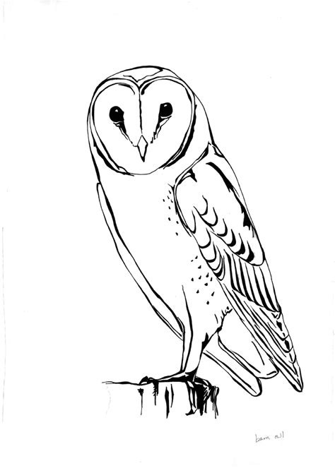 barred owl clipart  art pencil   color barred owl