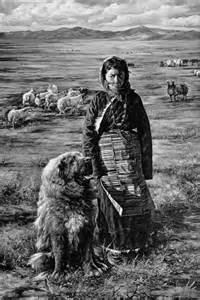 Tibetan Mastiff Dogs