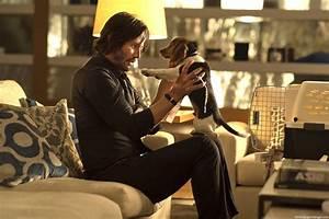 John Wick Movie 2014 Dog Pet Scene Wallpaper