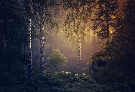 gloomy forest background  stock photo public domain