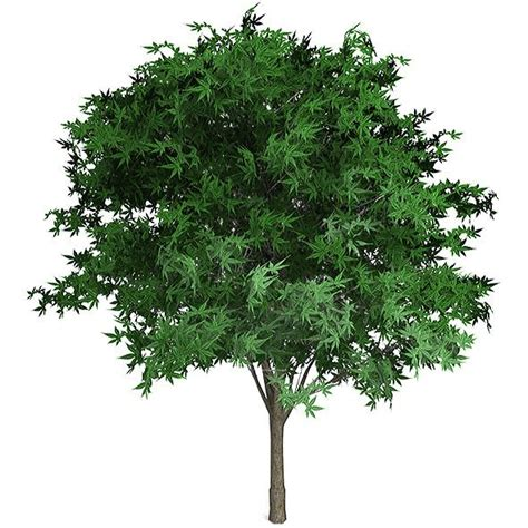 how to shape a maple tree maple tree shape for photoshop useful texture