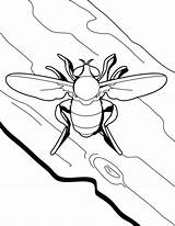 Coloring Fly Insect Sheet Sky sketch template