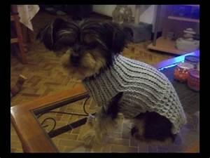 Video Pour Chien : tuto manteau pour chien au crochet youtube ~ Medecine-chirurgie-esthetiques.com Avis de Voitures