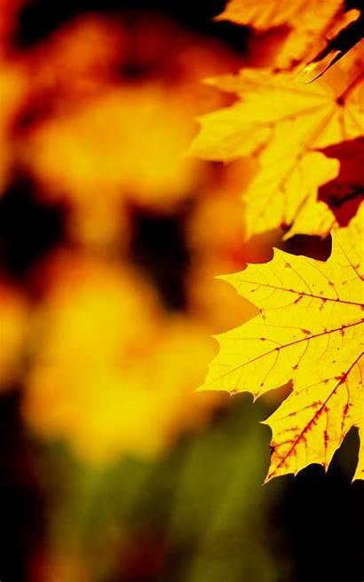 Leaf Autumn Fall Orange Phone Wallpapers Elegant