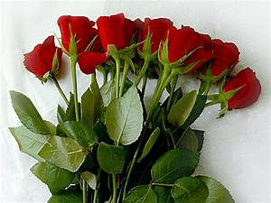 Pictures World: beautiful red rose wallpaper 1024×768